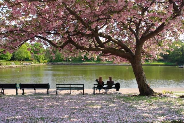 PJ Taste Cherry Blossom smaller